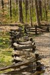 Split-Rail-Fence-Woods-1235863