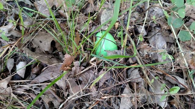 June_Easter _Egg-20150607_154738296